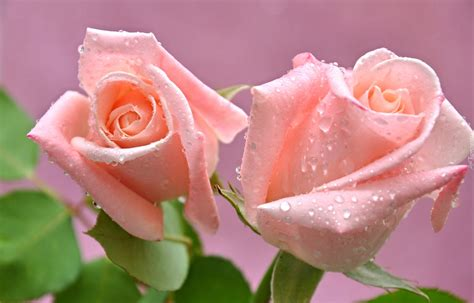 imagenes de flores libres r 243 że kwiaty