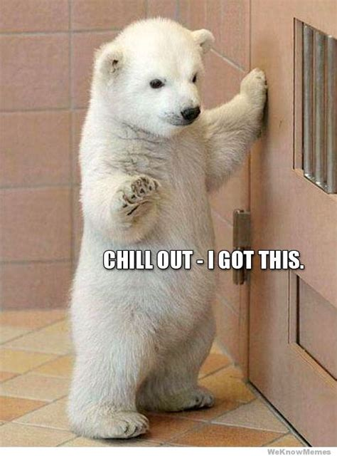 Polar Bear Meme - chill out i got this weknowmemes