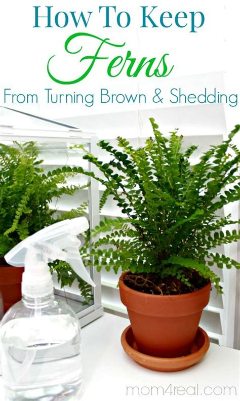 Best Way To Keep From Shedding by Best 20 Garden Types Ideas On Strawberry