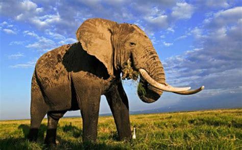 Elephant Bigsize Brown 10 interesting elephant facts my interesting facts