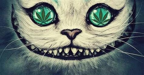 grifo weed stoners weedcat for more visit my profile https www