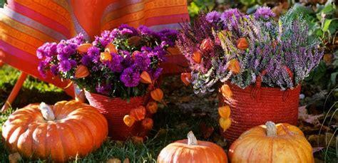 piante e fiori autunnali stella di natale come curarla e farla durare leitv