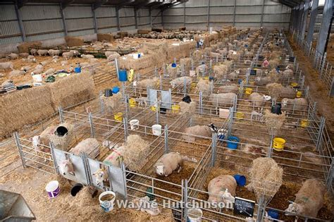 Free Home Floor Plans by Wayne Hutchinson Photography Sheep In Lambing Shed Cumbria