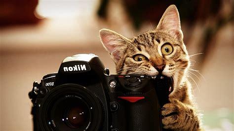 chat gratis camara cat nikon camera animals biting wallpapers hd