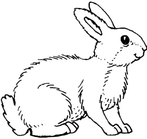 realistic bunny coloring page rabbit color pages az coloring pages