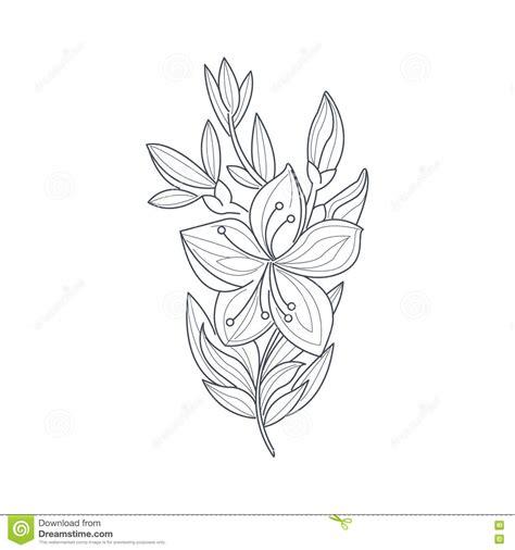 libro drawing flowers libro da colorare di jasmine flower monochrome drawing for illustrazione vettoriale immagine