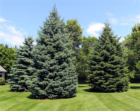 trees appleton wi evergreen trees and plants in appleton wi