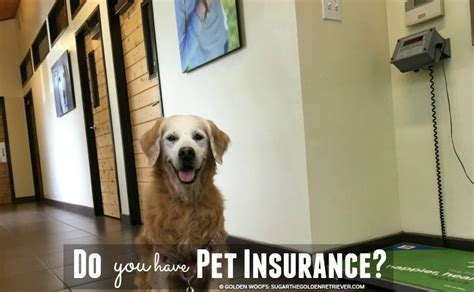 petsmart insurance do you pet insurance petsbest