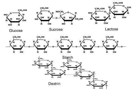 diagram of a carbohydrate hey bloggets chow on my carbohydrate quibit