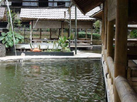 Bibit Ikan Koi Tegal pondok ikan gurame home