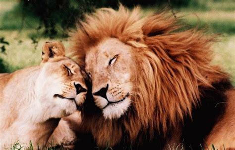 imagenes de animales romanticos fotos de animales romanticos imagui