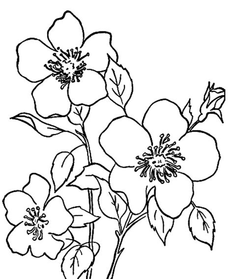 printable beautiful flowers 100 ideas to try about a single flowers to paint single