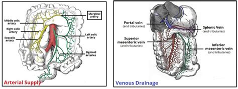 Detox Transverse Colon by The Colon Ascending Transverse Descending Sigmoid