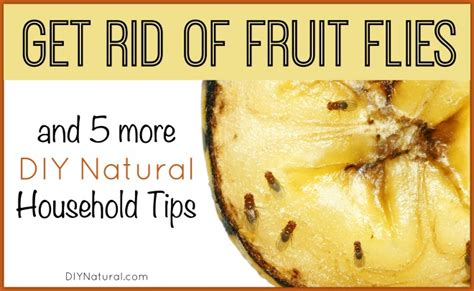 7 Ways To Get Rid Of Fruit Flies by Do It Yourself Diy Crochet Tips And Crafts For Your Family