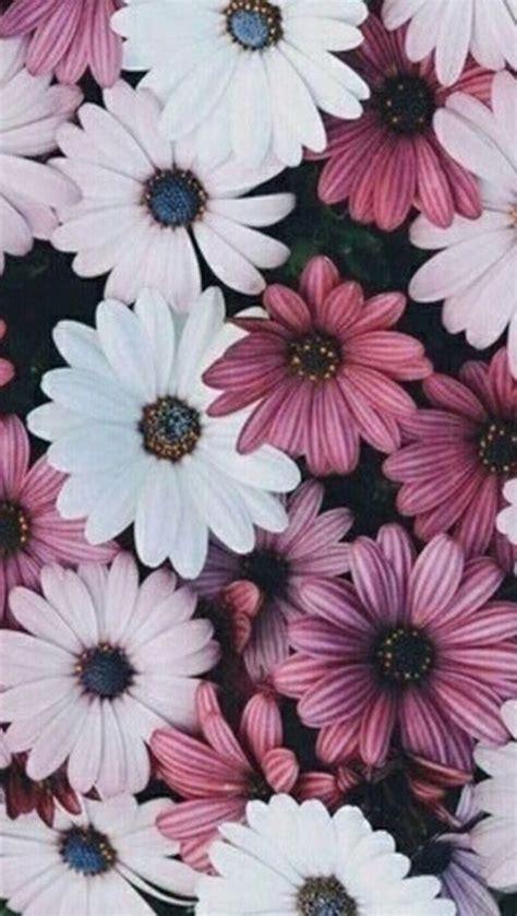 imagenes de flores exoticas para descargar fondos de pantallas de im 225 genes de flores ex 243 ticas