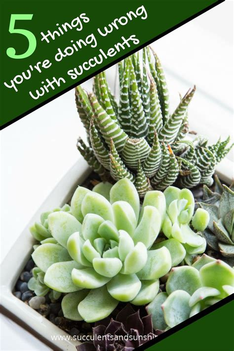 succulents that don t need light 179 best images about houseplants on pinterest