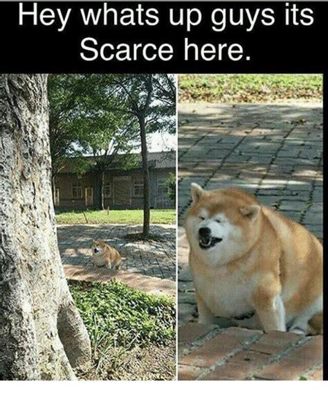 funny dank memes    sizzle click
