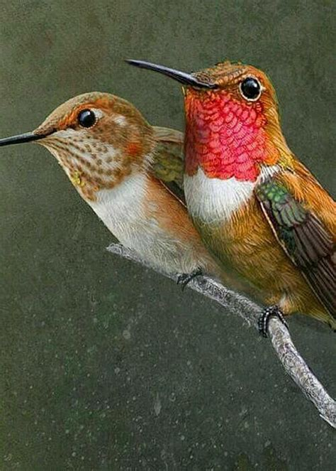 real hummingbird feathers for sale 1085 best birds images on beautiful birds birds and birds