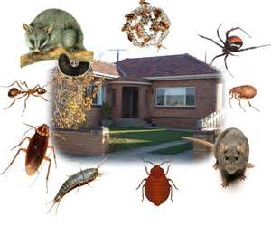 Home Pest Control by Pest Control For Your Wichita Home Patton Termite And Pest