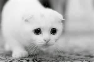 kumpulan gambar kucing lucu imut kumpulan gambar animasi bergerak gif