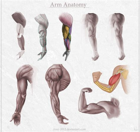 how to get better at arm anatomy lessons how to improve faster in 6 steps by
