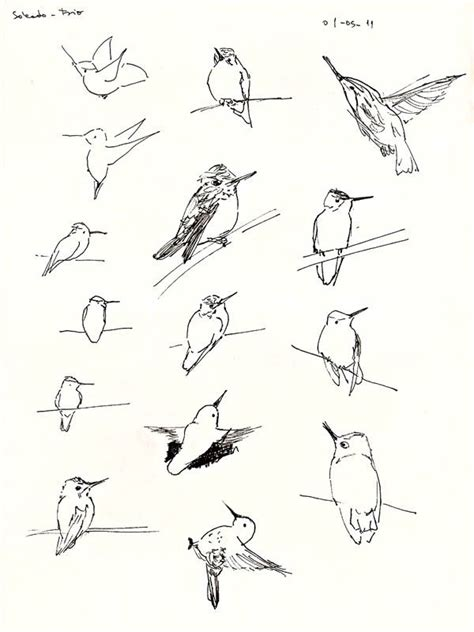 dibujar flores faciles paso paso inittowinitorg 1000 ideas about colibri para dibujar on pinterest