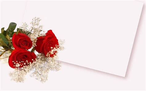 background design red rose red rose flower backgrounds wallpaper cave