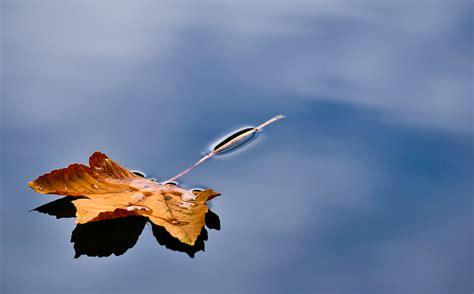 Im Wasser by Herbstblatt Im Wasser Foto Bild Jahreszeiten Herbst