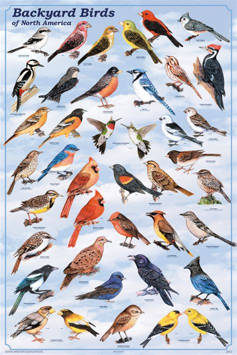 types of backyard birds backyard birds poster birds pictures posters prints decor