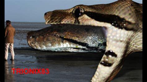 imagenes anacondas reales titanoboa real titanoboa vs anaconda serpientes