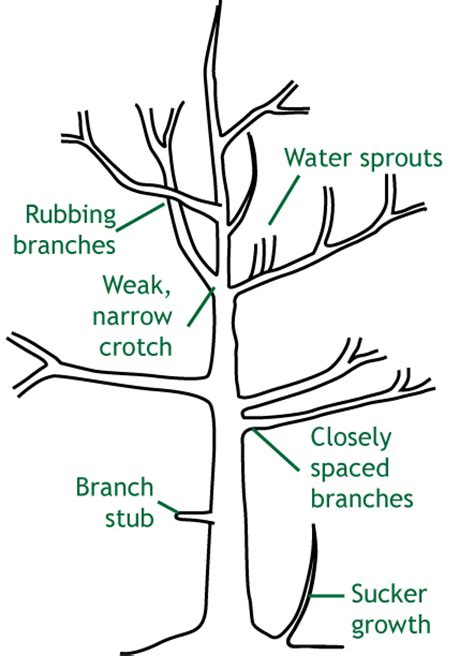 tree pruning how to prune hq