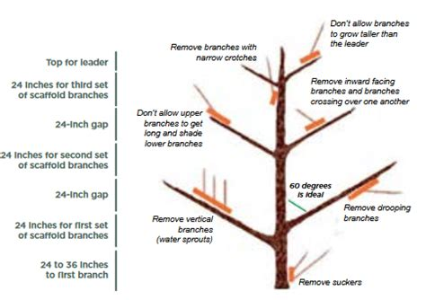 how to trim the back when going for short hair on the sides tree fruit culture and cultivars in north dakota