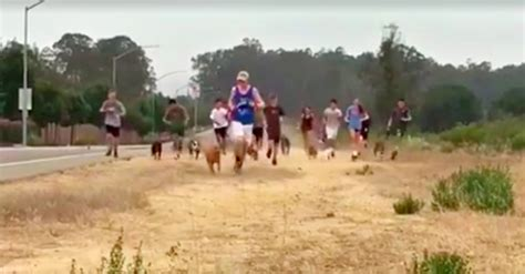 high country puppy rescue what this high school cross country team did for shelter dogs will make your whole