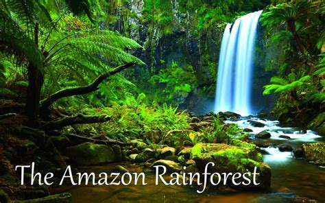 amazon amazon top 10 facts about amazon rainforest best toppers