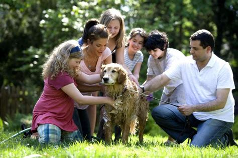 family photos with dogs pets archives cori s cozy corner