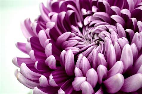 Stocking Ideas by Mother S Day Stock Ideas Tesselaar Flowers