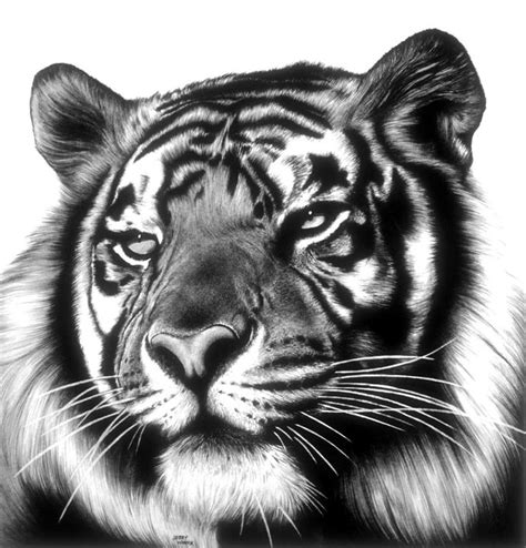 Best 25+ Tiger face drawing ideas on Pinterest | Young art ... Realistic Tiger Makeup