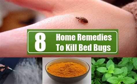 kill bed bugs     chemicals