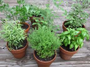 do you know how easy it is to start your first herb garden naturalalternativeremedy