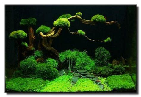 guide to aquascaping 25 best ideas about aquarium backgrounds on pinterest