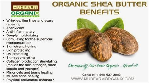 Shea Butter Benefits by Mudfarm Organix 100 Affordable And Handmade Cosmetics