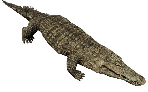 krokodil images crocodile official the forest wiki