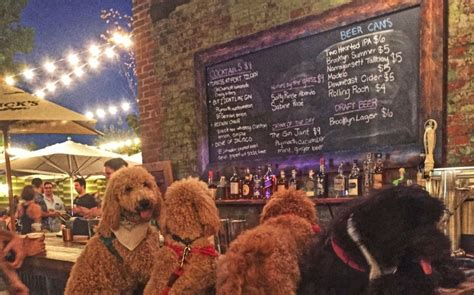 golden retriever bar meet new york s favourite pooch samson the dood is caters news agency