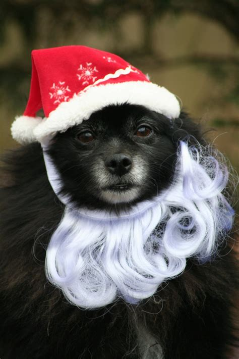 christmas pets  totally ready  celebrate animals zone