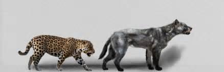Jaguar Size Compared To American V Epicyon Haydeni 2
