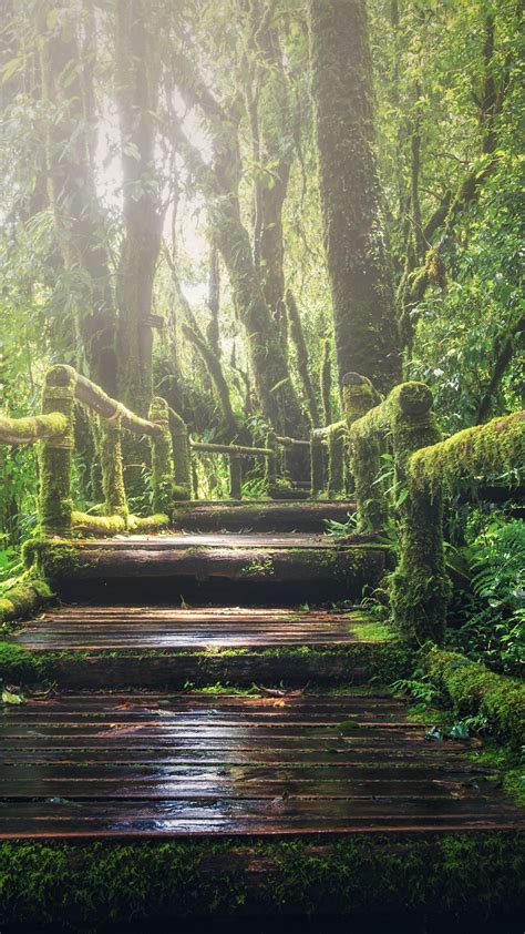 wallpaper forest green  nature