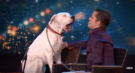 whitney minnesota video dog dog sings whitney houston s hit on talent show now this