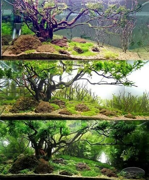 aquascape environmental 17 best images about aquascaping on pinterest