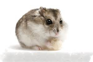 Our funny planet hamster our funny planet