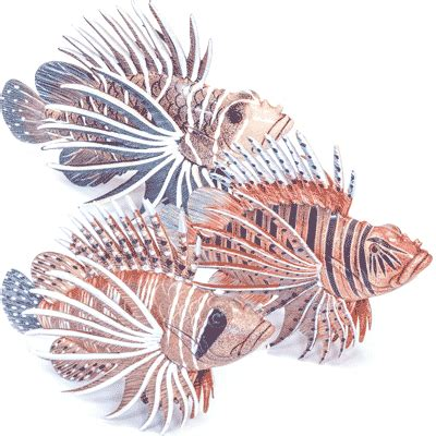 decorative plastic fish decorative fish decorative accessories nets more
